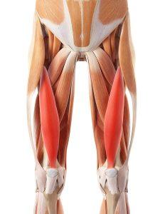 Плавание на спине какие мышцы задействованы thumbnail